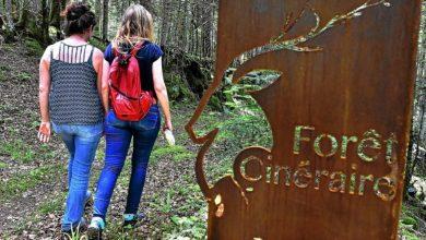 Photo de La forêt cinéraire, une idée d'avenir pour Bergerac ?